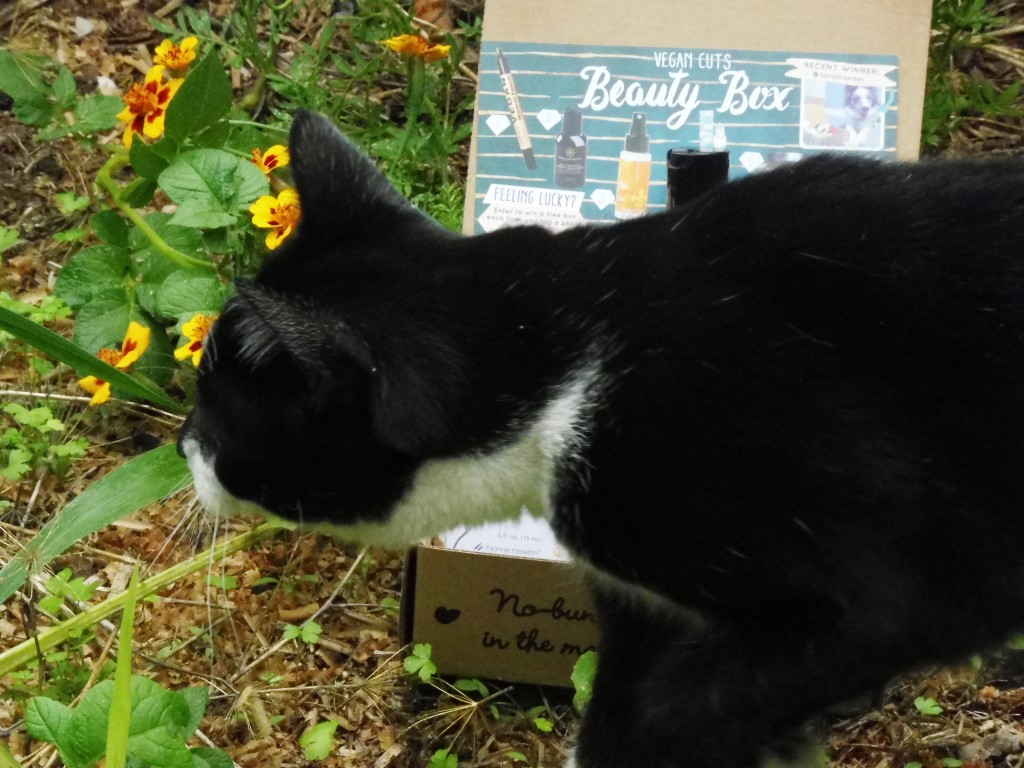 Vegan Cuts beauty box featuring Gypsy the cat